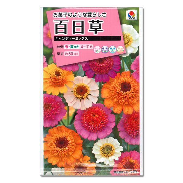 「百日草 キャンディーミックス」の画像検索結果
