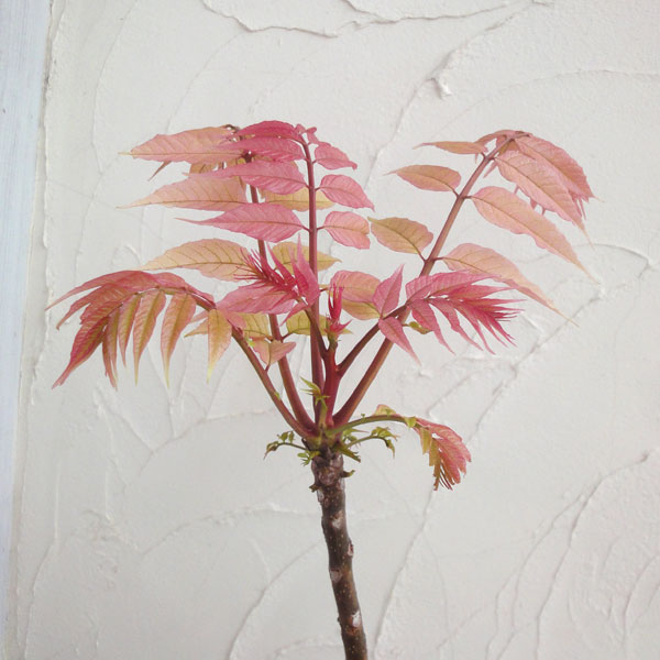 フラミンゴの画像 p1_12