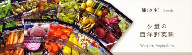 種(タネ):少量の西洋野菜種