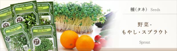 種(タネ):野菜 もやし スプラウト