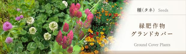 種(タネ):緑肥作物 グランドカバー