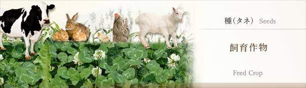 種(タネ):飼料作物
