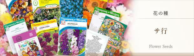 種(タネ):花の種 サ行