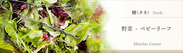 種(タネ):野菜 ベビーリーフ