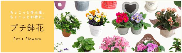 鉢花:自家用向きプチ鉢花