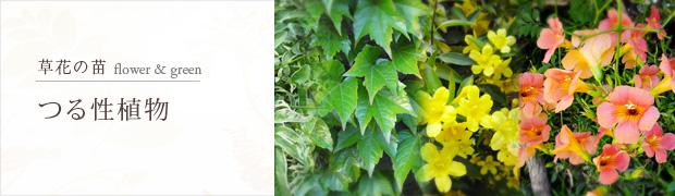 草花の苗:つる性植物