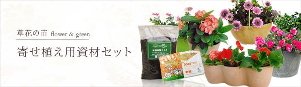 草花の苗:寄せ植え用資材セット