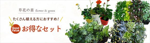 草花の苗:お得なセット・おためしセット