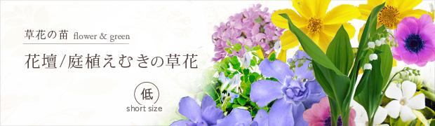草花の苗:花壇 庭植えむきの草花[低]