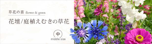 草花の苗:花壇 庭植えむきの草花[中]