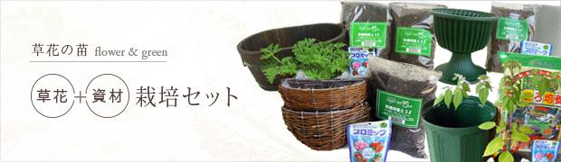 草花の苗:栽培セット