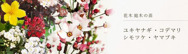 花木 庭木の苗:ユキヤナギ コデマリ シモツケ ヤマブキ