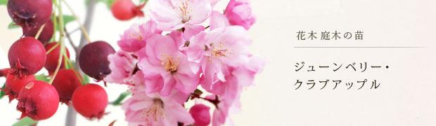 花木 庭木の苗:ジューンベリー クラブアップル