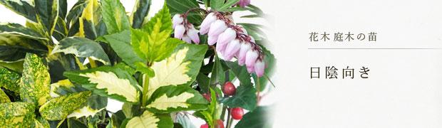 花木 庭木の苗:日陰向き