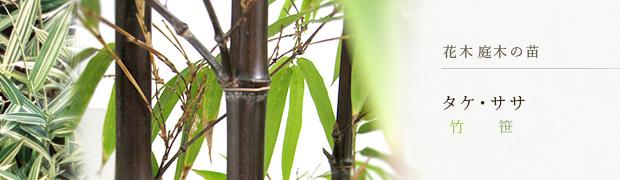 花木 庭木の苗:タケ(竹) ササ(笹)