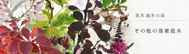 花木 庭木の苗:その他の落葉低木