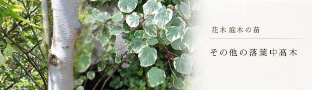 花木 庭木の苗:その他の落葉中高木