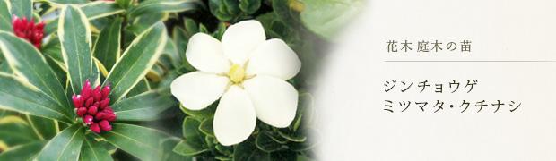 花木 庭木の苗:ジンチョウゲ ミツマタ クチナシ
