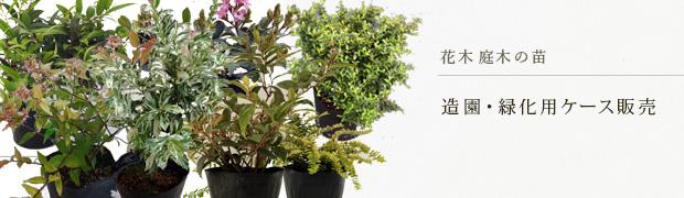 花木 庭木の苗:造園・緑化用ケース販売