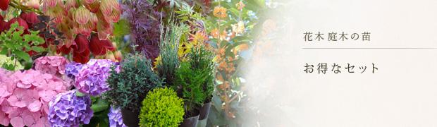 花木 庭木の苗:お得なセット