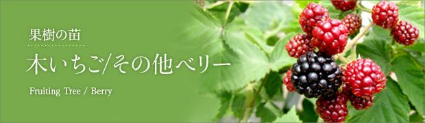 果樹の苗:木イチゴ その他ベリー