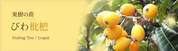 果樹の苗:ビワ(枇杷)