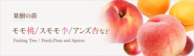 果樹の苗:モモ(桃) スモモ(李) アンズ(杏)など