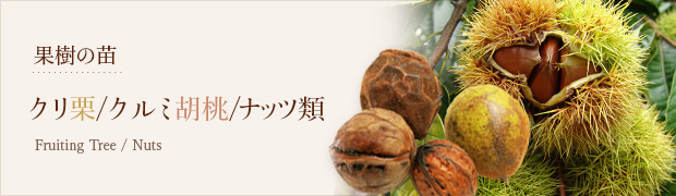 果樹の苗:クリ(栗) クルミ(胡桃) ナッツ類