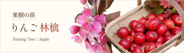 果樹の苗:リンゴ(林檎)