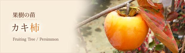 果樹の苗:カキ(柿)