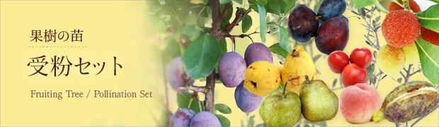 果樹の苗:受粉セット