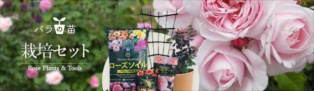 バラの苗:バラの栽培セット