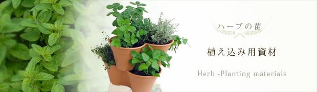 ハーブの苗:植え込み用資材