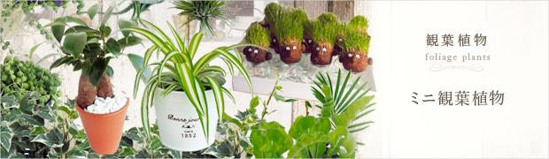 観葉植物:ミニ観葉植物