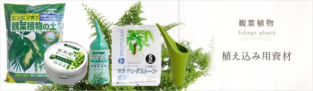 観葉植物:植え込み用資材