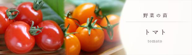 やさいの苗:トマト