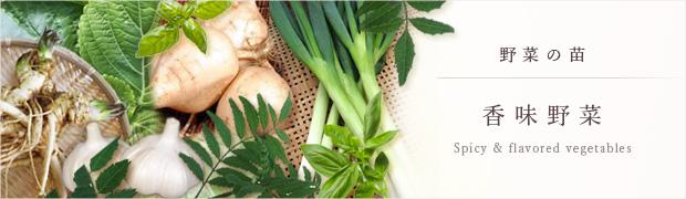 やさいの苗:香味野菜