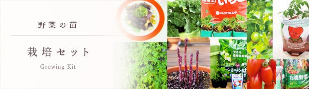 やさいの苗:栽培セット