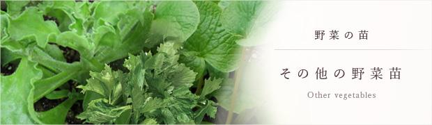 やさいの苗:その他の野菜苗
