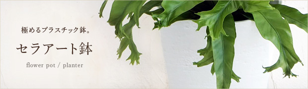鉢 プランター:セラアート鉢