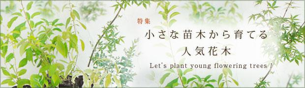 季節の特集:小さな苗木から育てる人気花木