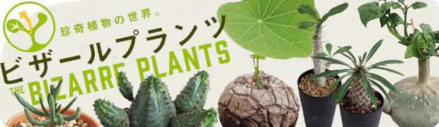 季節の特集:珍しい植物