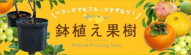 季節の特集:鉢植え果樹