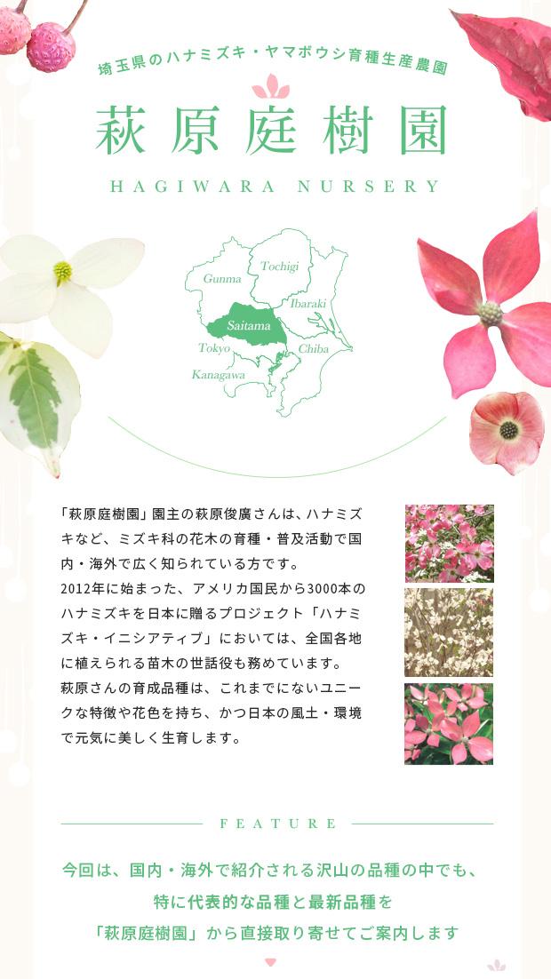埼玉県のハナミズキ・ヤマボウシ育種生産農園「萩原庭樹園」の育成品種特集です。園主の萩原俊廣さんはハナミズキやヤマボウシなどミズキ科の花木の育種・普及活動で国内のみならず海外でも広く知られた方で、2012年に始まった米国民から3000本のハナミズキを日本に贈るプロジェクト「ハナミズキ・イニシアティブ」において、全国各地に植えられる苗木の世話役も務められました。萩原さん育成の品種はこれまでにないユニークな特徴を持ち、かつ日本の風土・環境で元気に美しく生育します。すでに多くの品種を国内・海外で紹介されていますが、中でも代表的な品種と最新品種を「萩原庭樹園」から直接取り寄せてご紹介します。