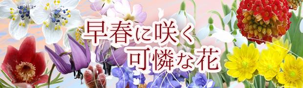 早春に咲く可憐な花