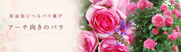 用途別につるバラ選び:アーチ向きのバラ