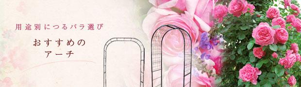 用途別につるバラ選び:おすすめのアーチ