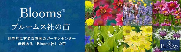 ブランド:苗 Blooms(ブルームス社)