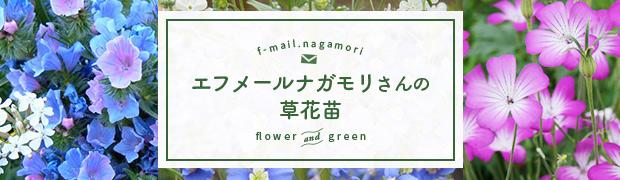 エフメールナガモリさんの草花の苗