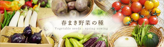 春まき野菜の種